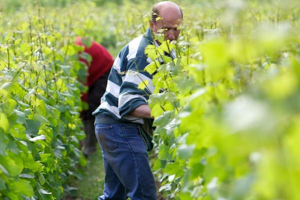 vigneron-dun-jour-37e7b