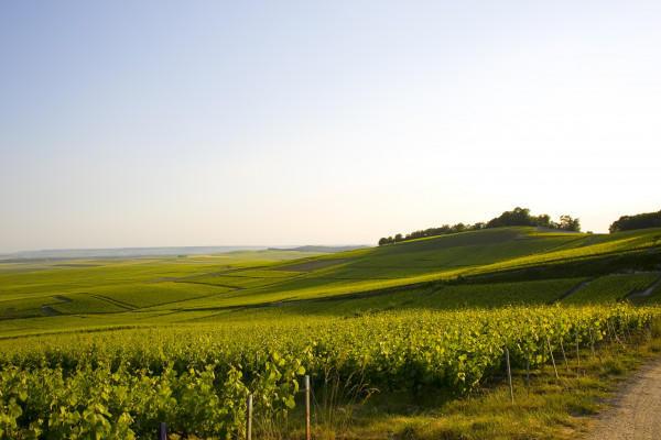visite-authentique-au-champagne-alain-vesselle-3a04e