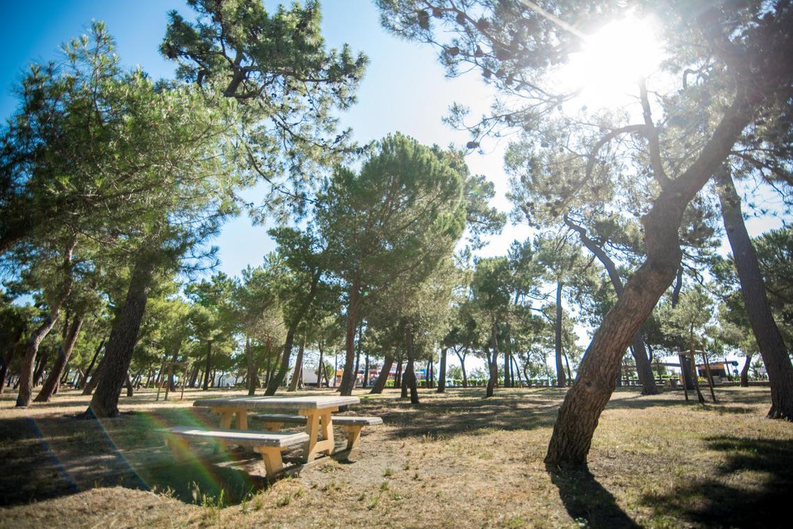 Bois_des_pins-ArgelesTourisme-Stephane_FERRER-4952-1200px