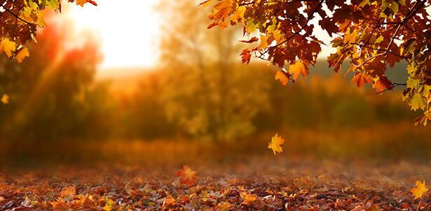 couleur-d-automne-feuille-automne-arbres_shutterstock_1182854209