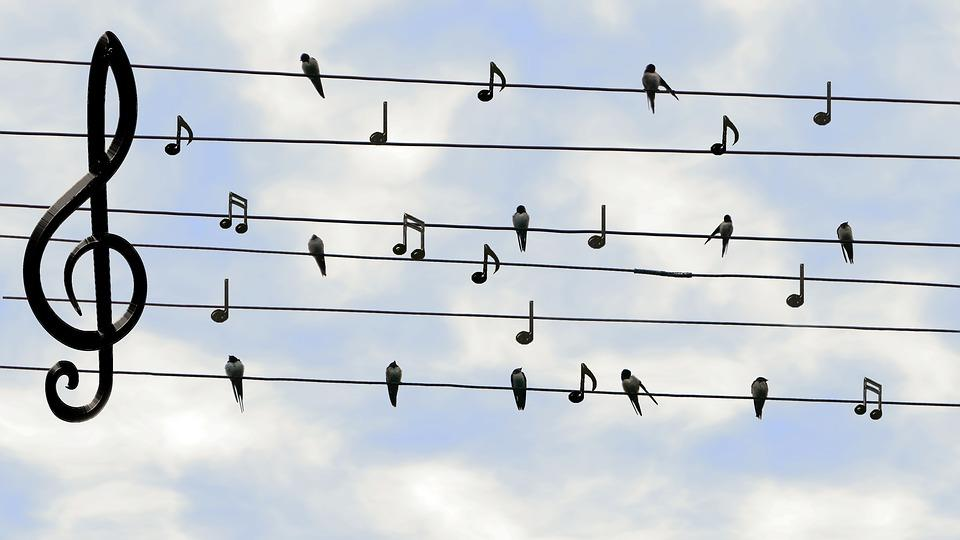 Musique_Partition_Oiseaux