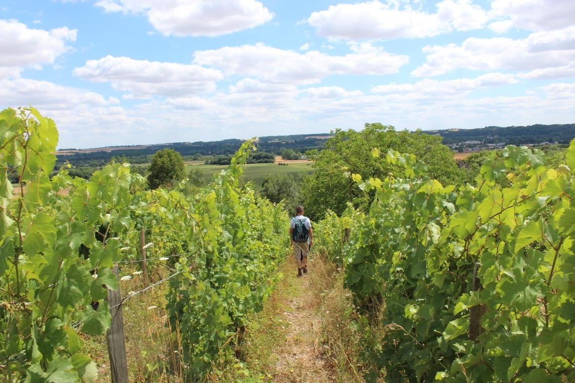 Balade contée Sophie Kluzek-vignoble Lhomme-Ruillé OTVL 2015 (5)