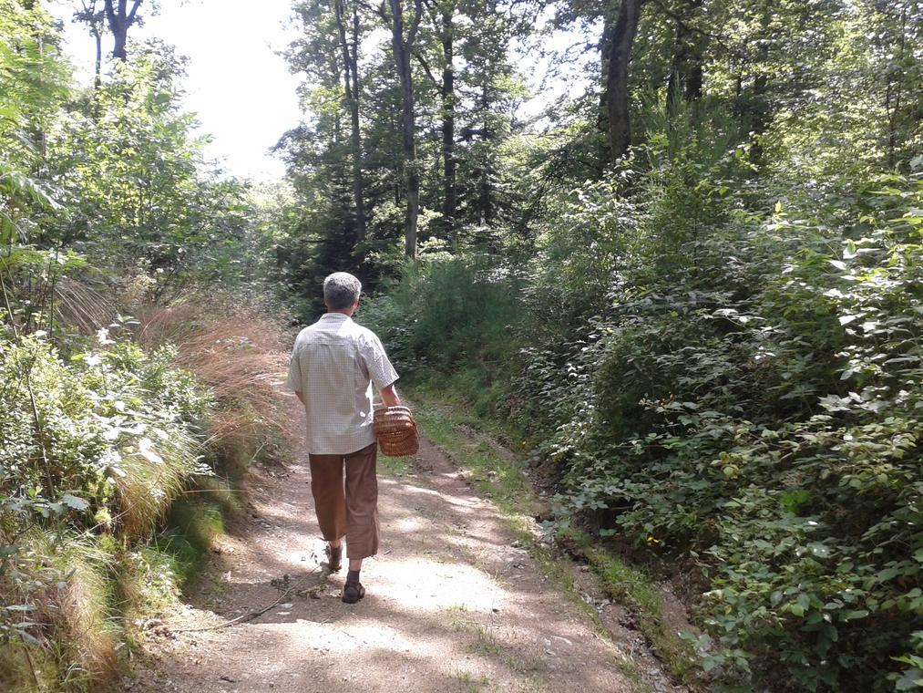 Cueillette en forêt