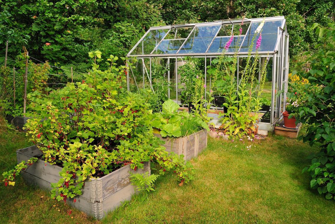 Permaculture-la-nature-reprend-ses-droits-au-potager