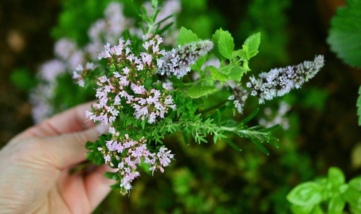 culinary-herbs-2614245-1920