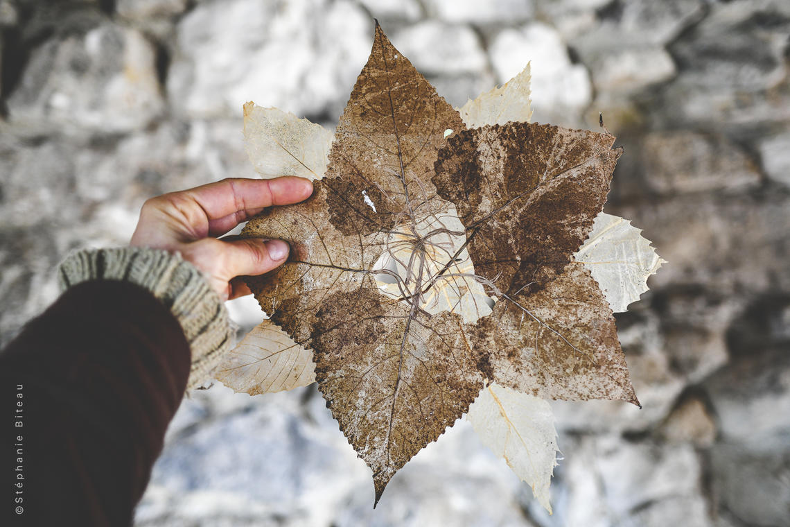 feuilles chataignier