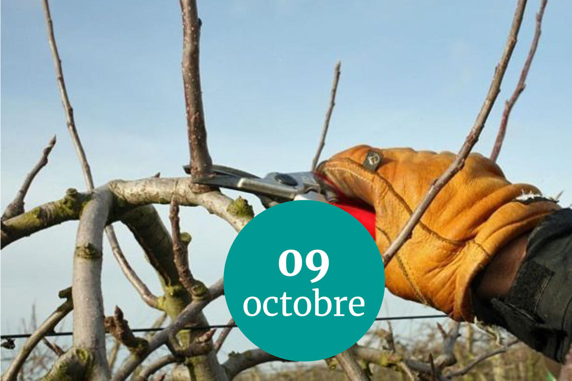 taille-9 oct