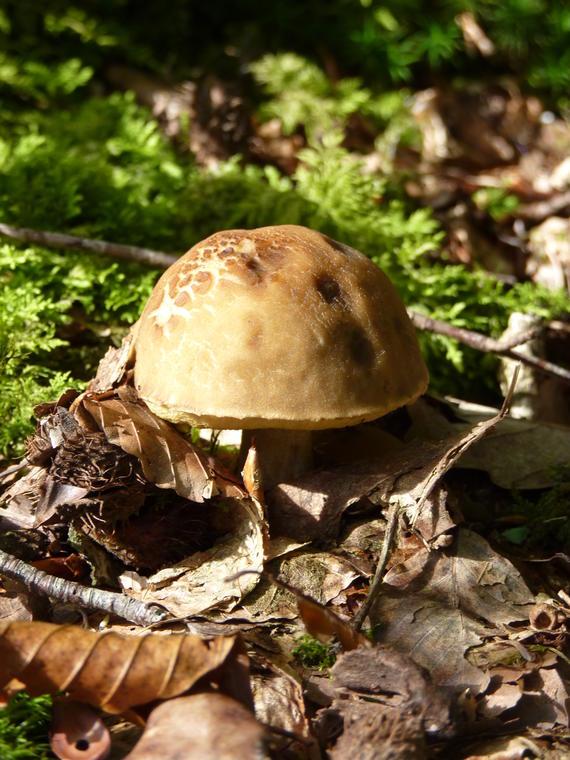 Découverte des champignons avec l'ONF