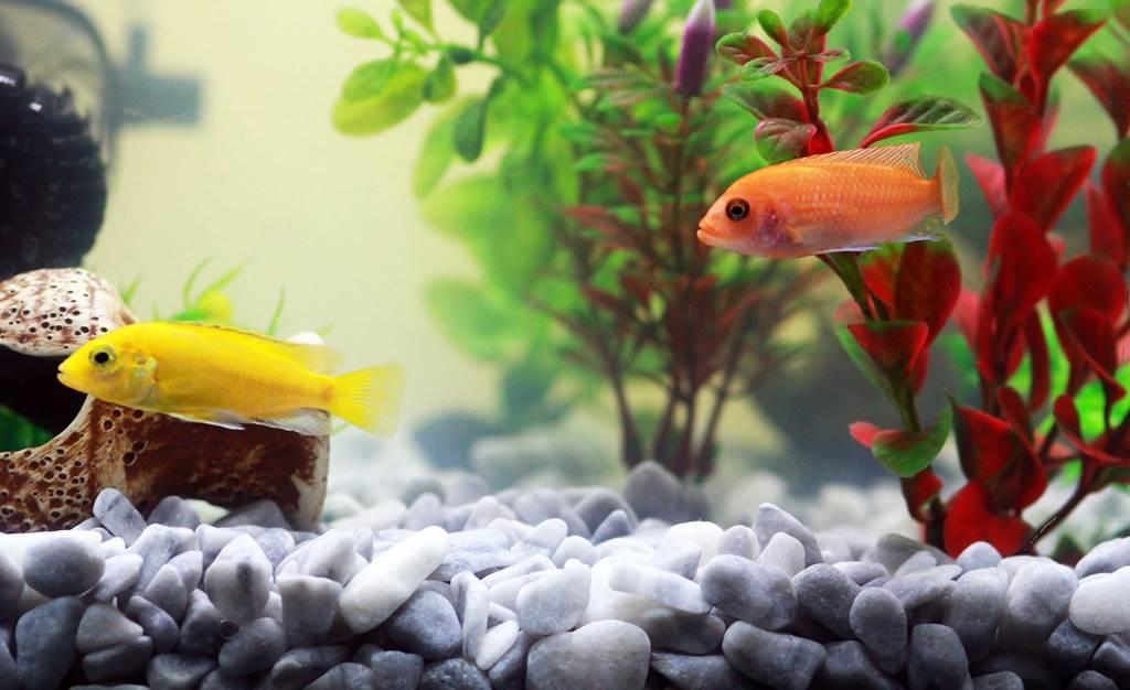 Club aquariophile
