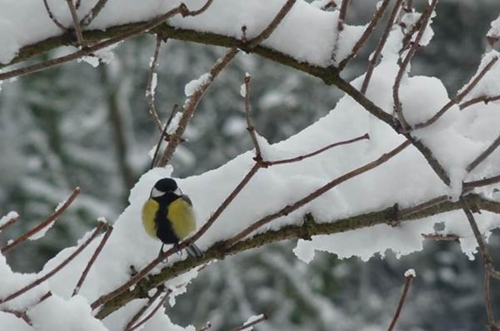 """Sortie nature : Jeu de piste """"Les oiseaux de la forêt"""""""