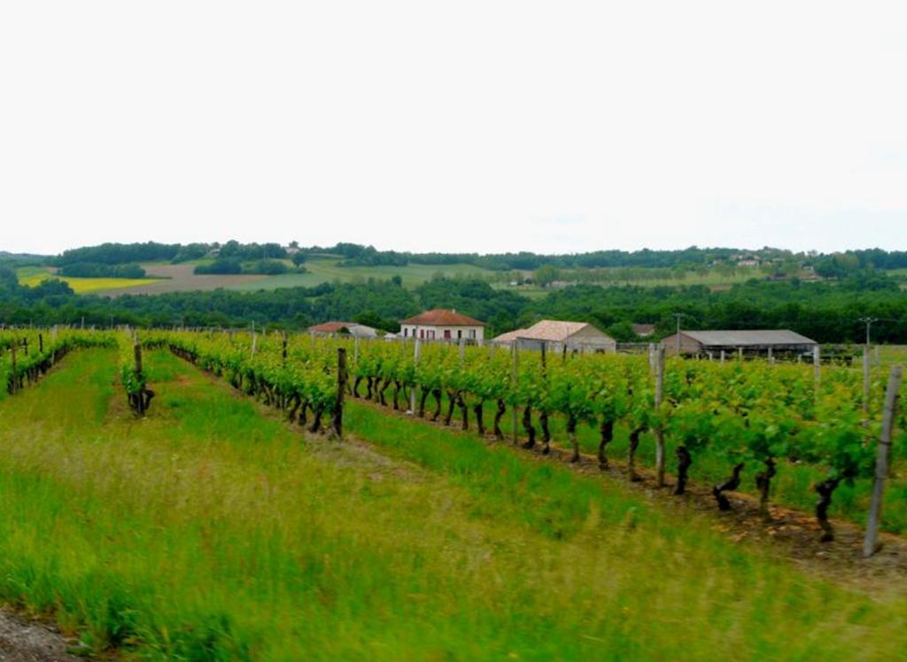 Domaine du Gabachou vignes