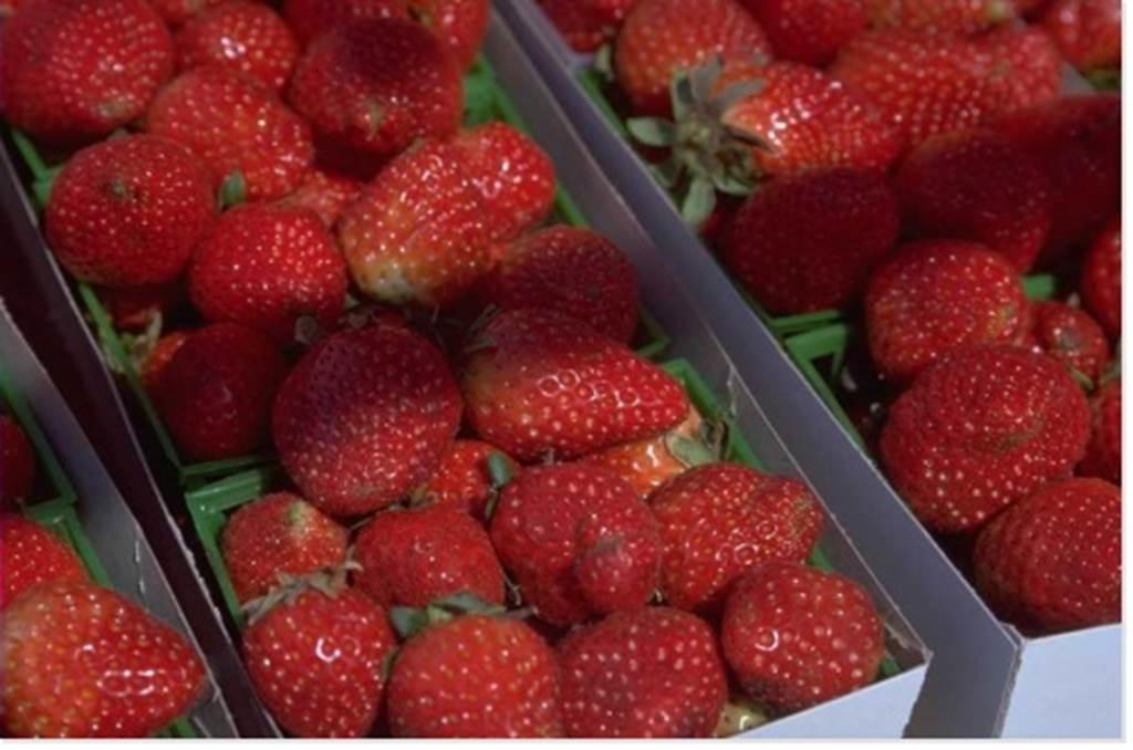 Gardez la fraise