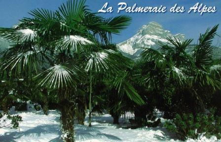 La palmeraie des Alpes