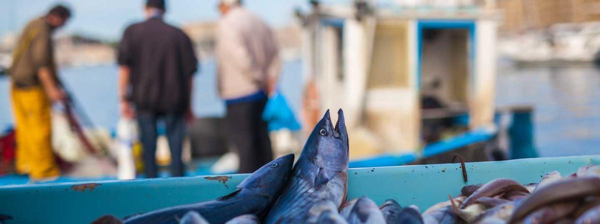 Etal des pêcheurs 1