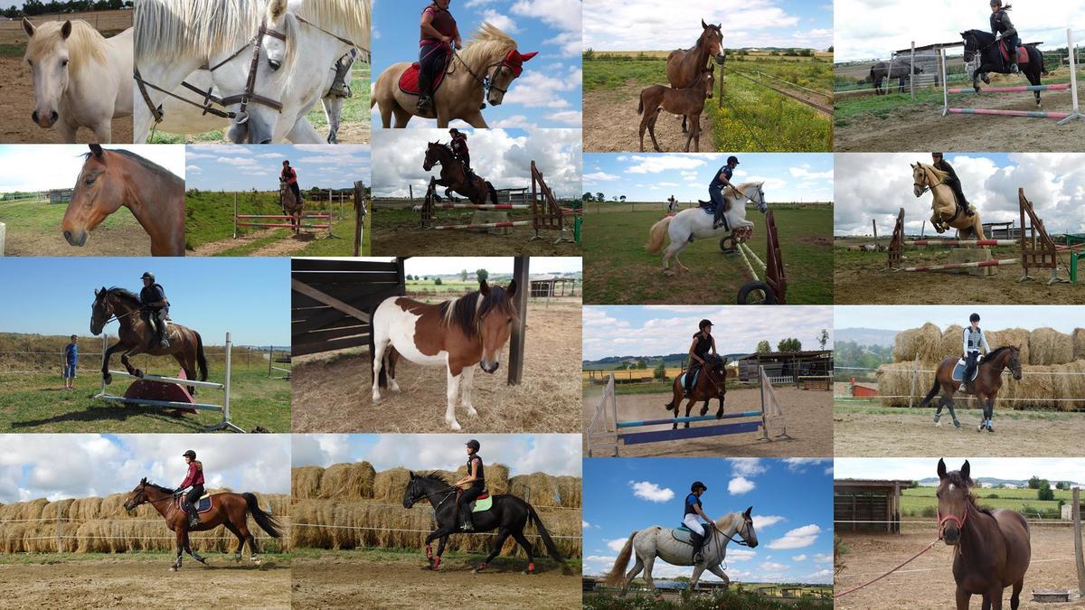 Ecole du cheval