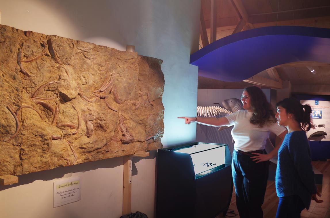 Exposition Sirènes et Fossiles 3