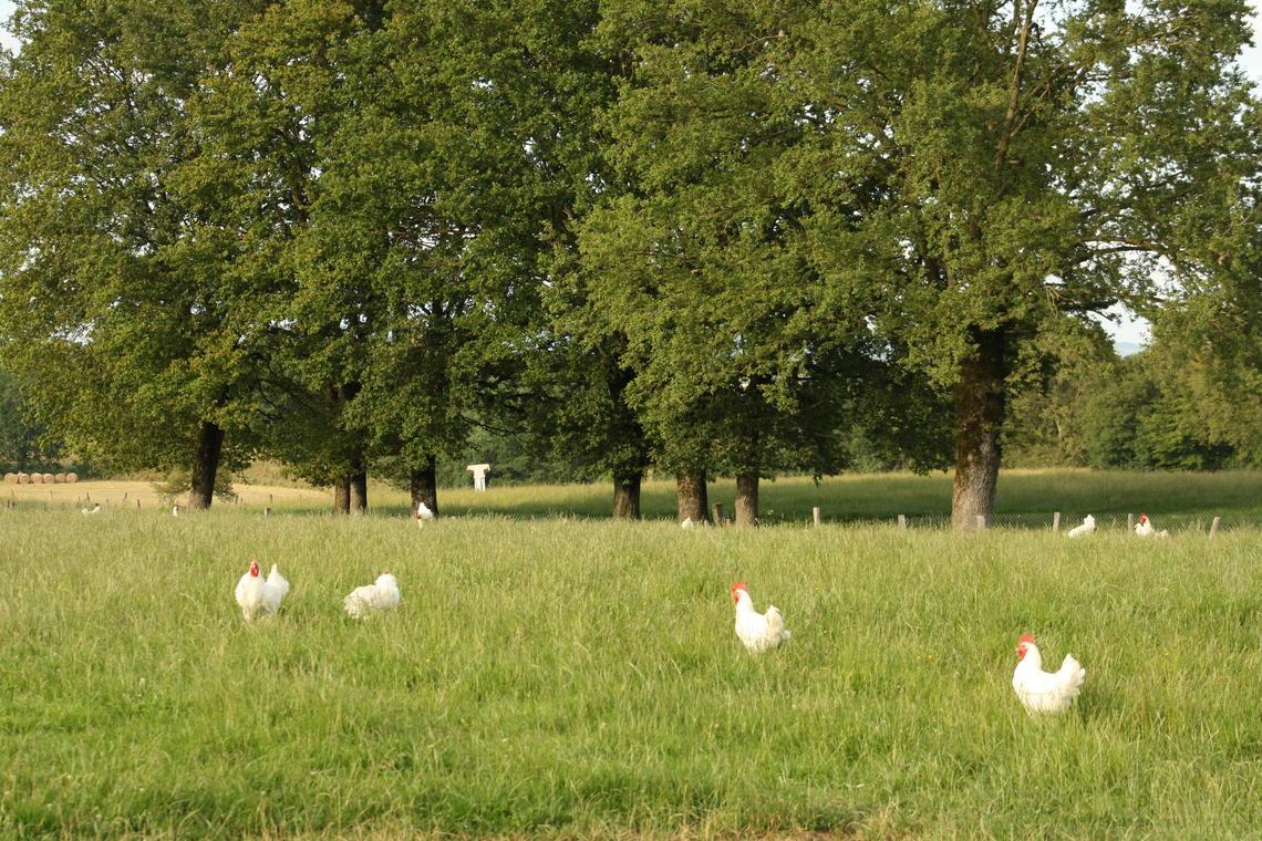 elevage de volailles de Bresse