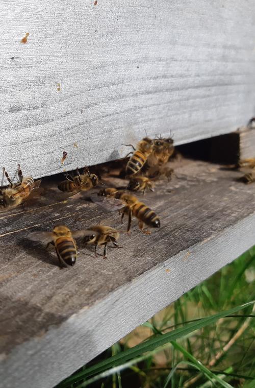 Découverte abeilles
