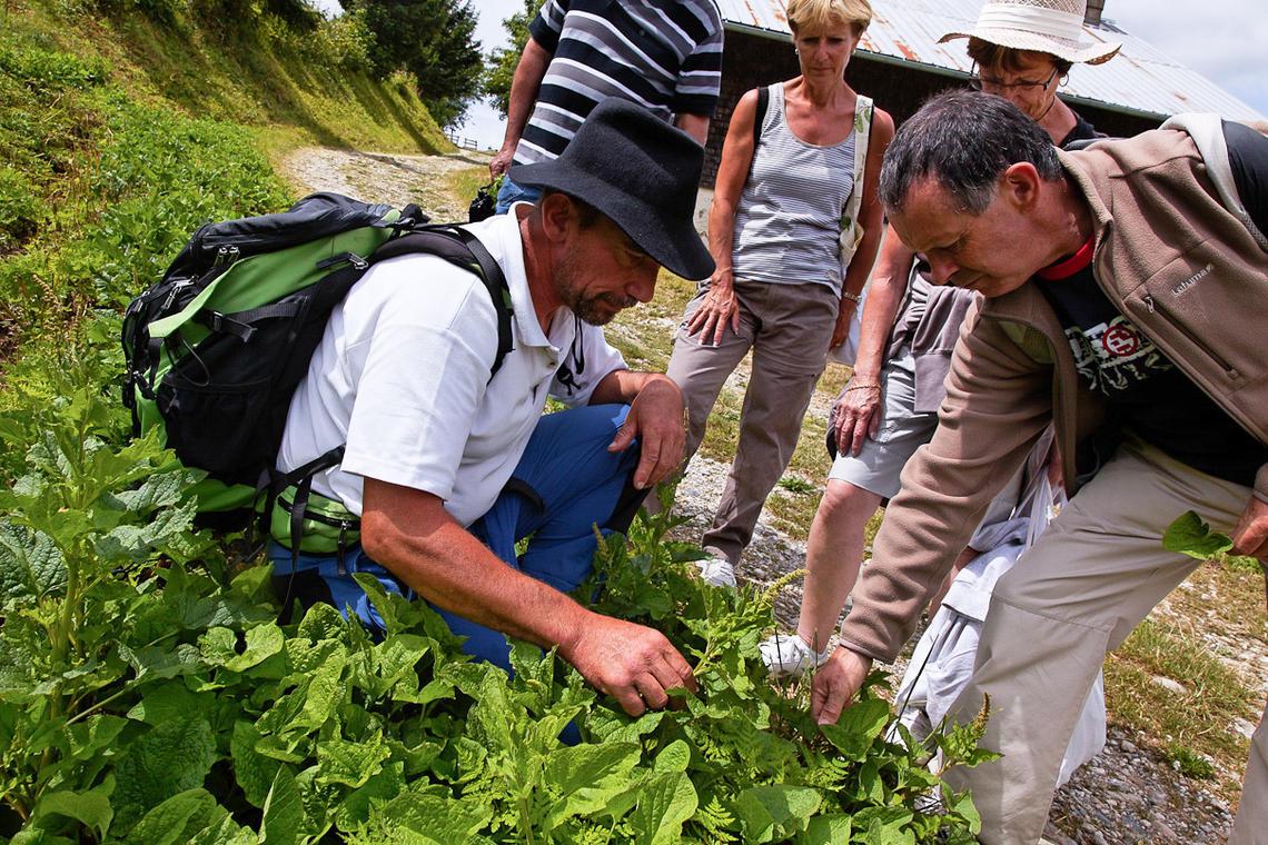 Découverte des plantes sauvages comestibles et leurs utilisations culinaire