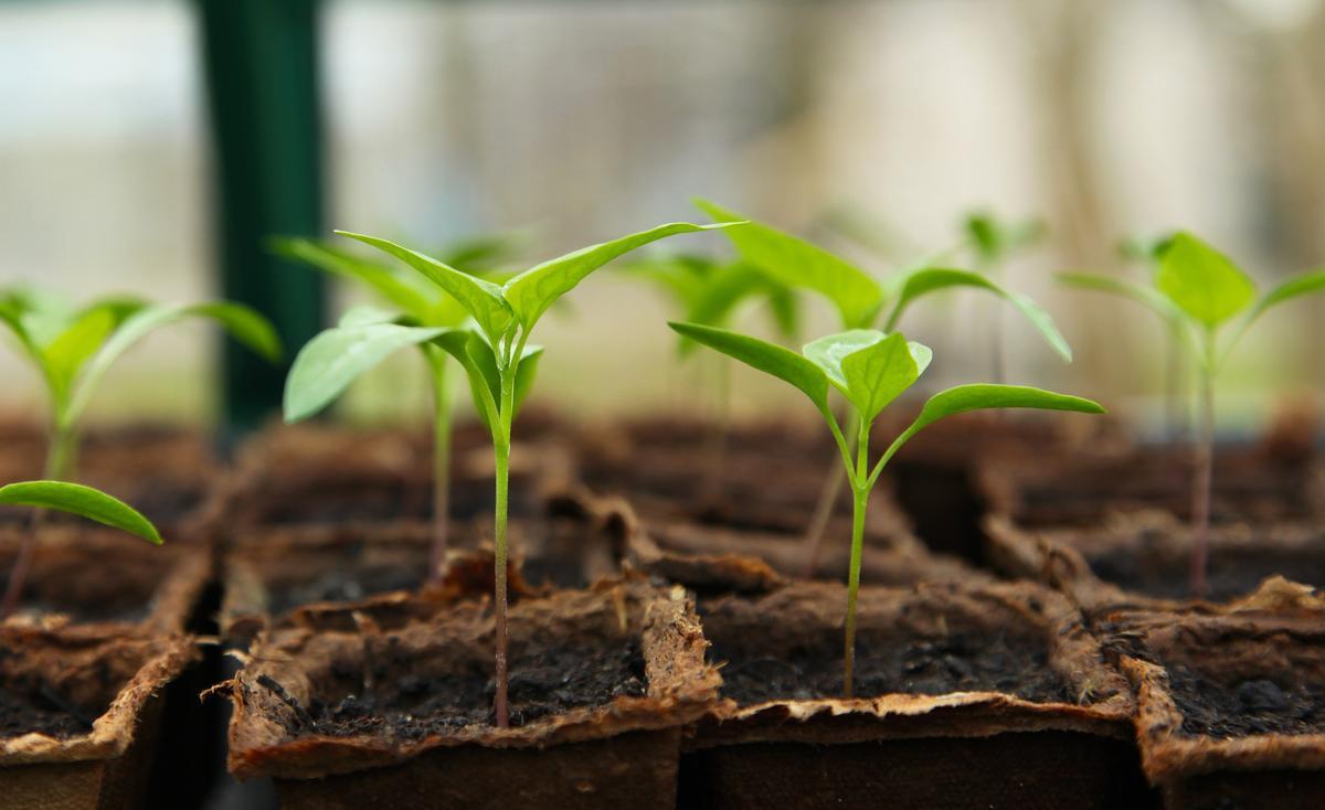Semis de Jardinage