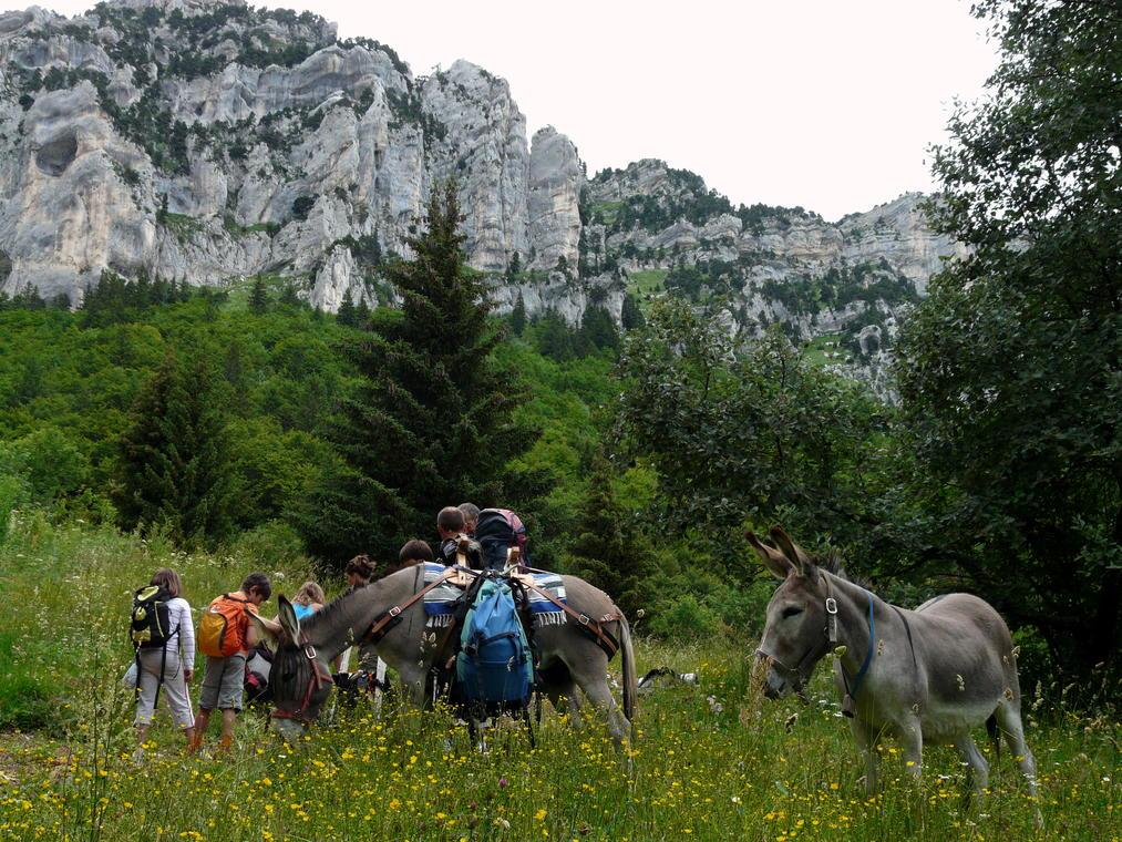 Rando avec les ânes