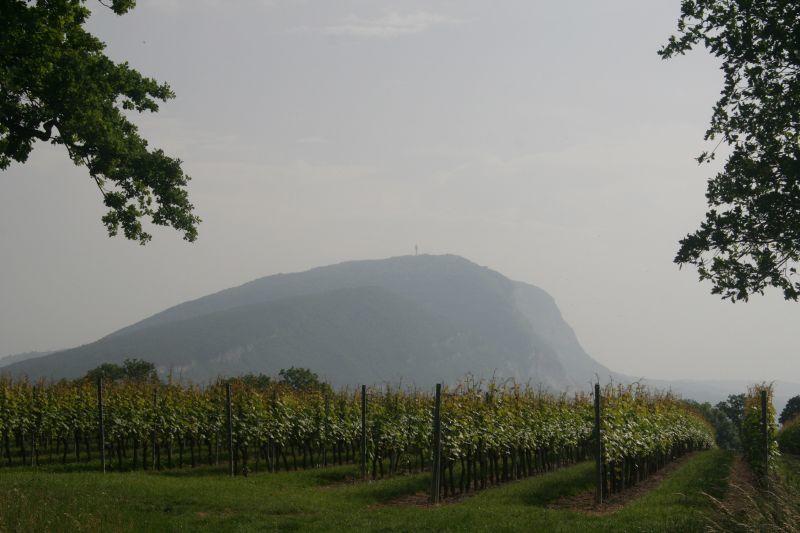 vigne de Carra