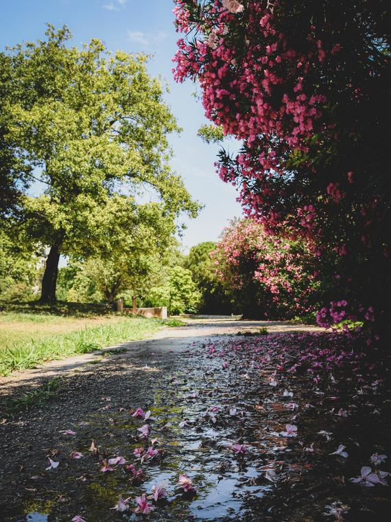 Parc de l'Oasis
