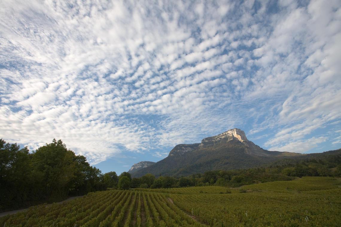Vignobles au pied du Mont Granier