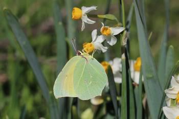 Conférence Nature - Les pollinisateurs - Hyères