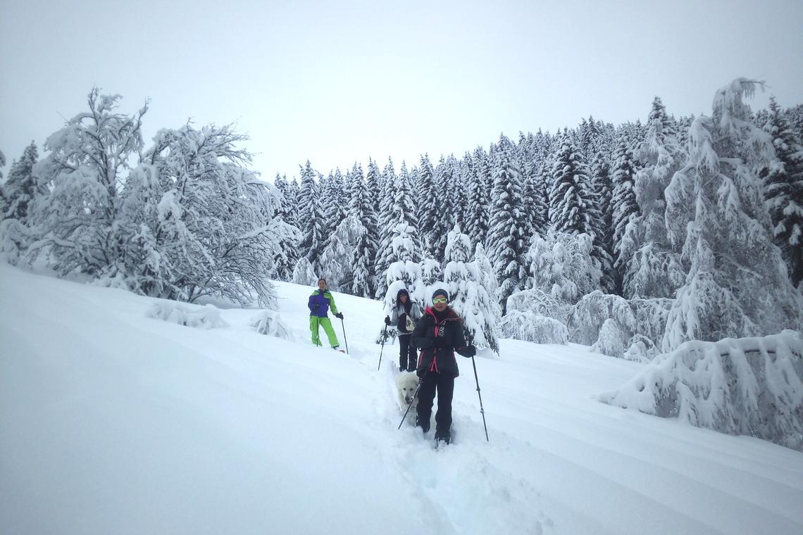 Randonnée en raquettes avec un accompagnateur en montagne