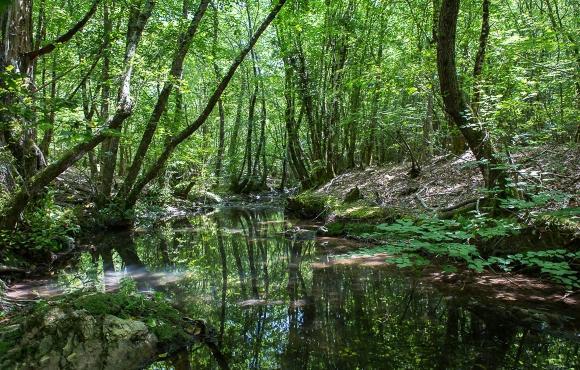 Forêt royale
