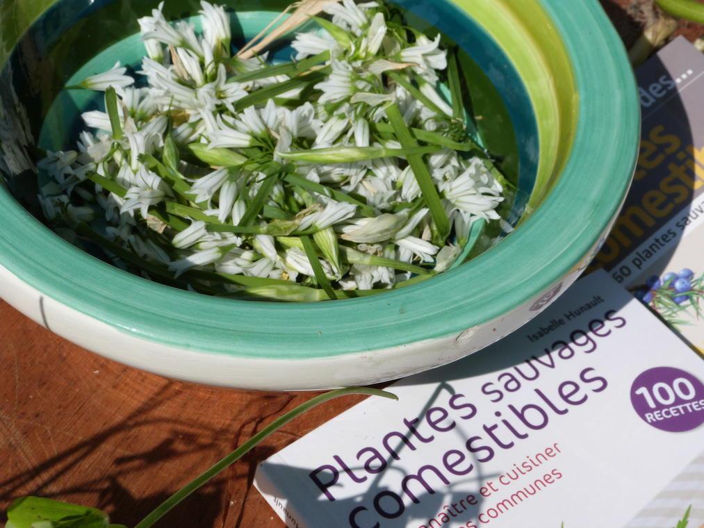 Atelier La cuisine des plantes sauvages
