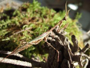 C (24) 1600x1200 Insecte Eco Musée
