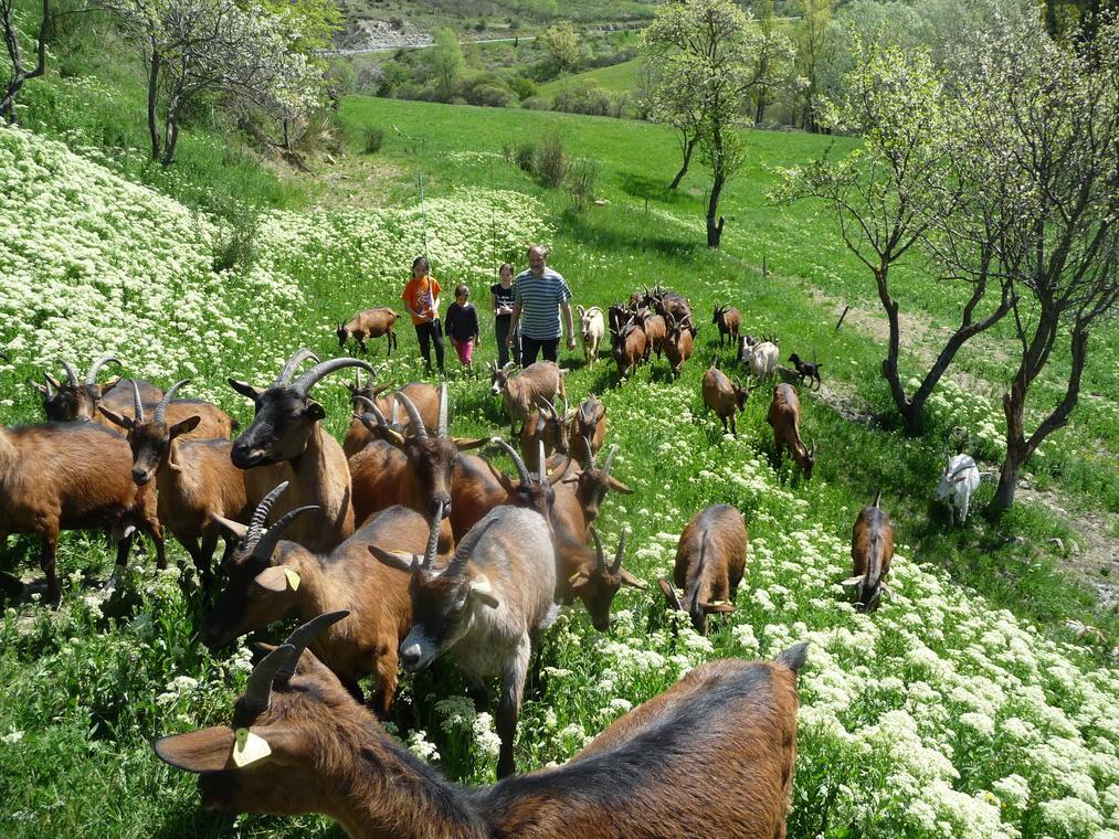 Visite de la ferme découverte Les Jassines