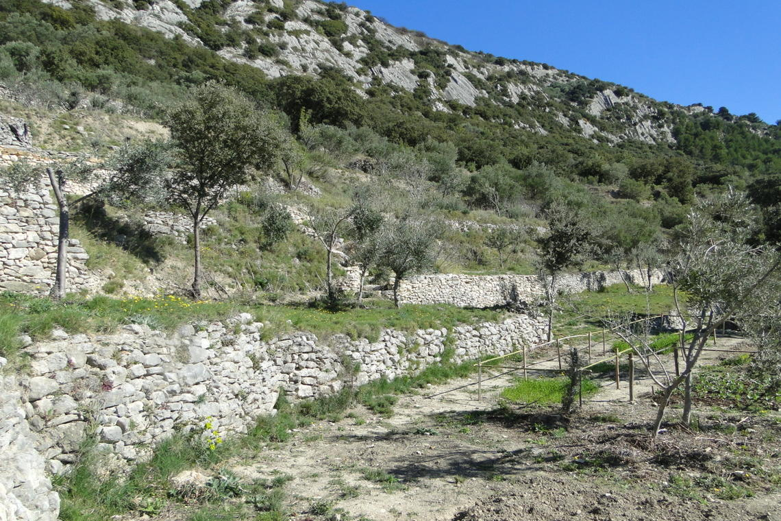 Balade dans les oliveraies