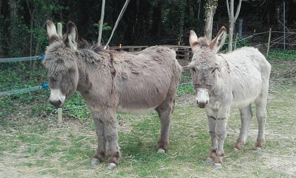 Les ânes de lap'ânerie