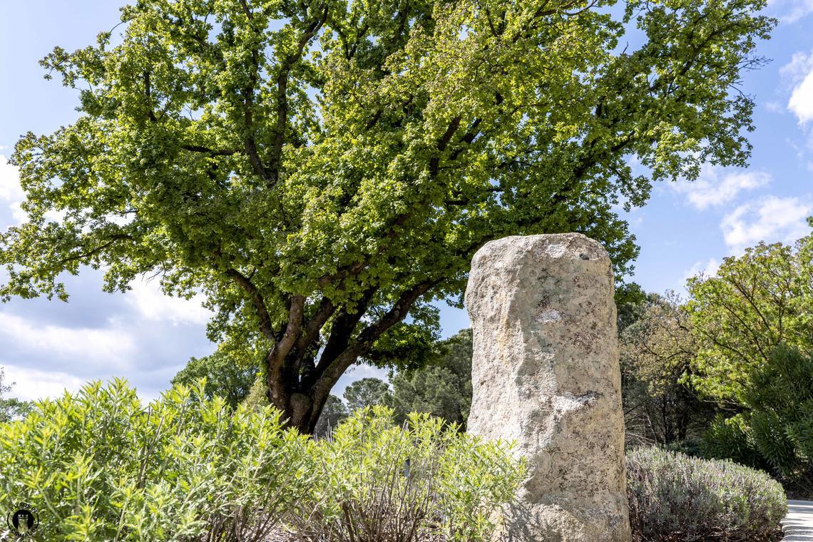 Menhir à Grimaud