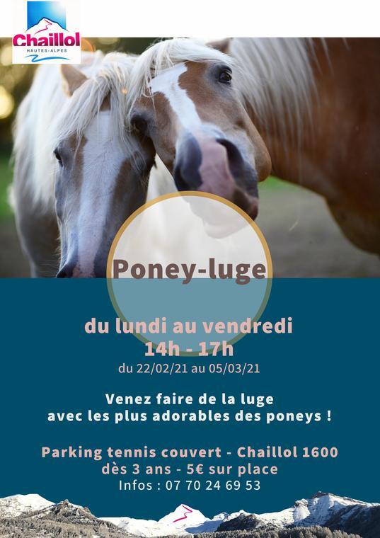 Poney-luge