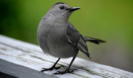 Des balades ornithologiques au Grand Parc
