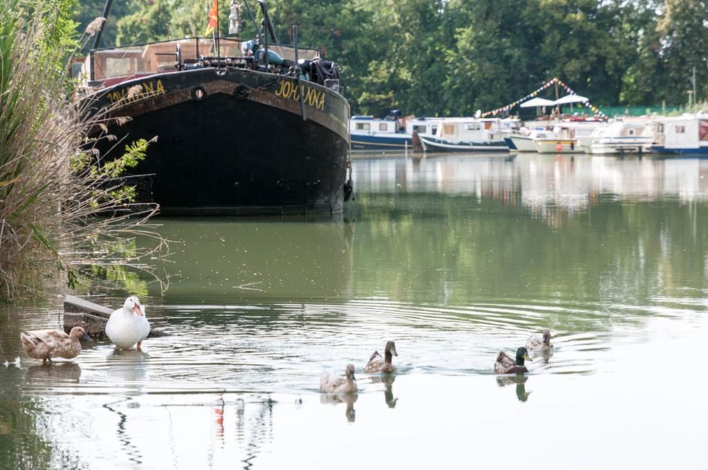 Pêcher dans le canal, Montauban, Tarn-et-Garonne, Nature