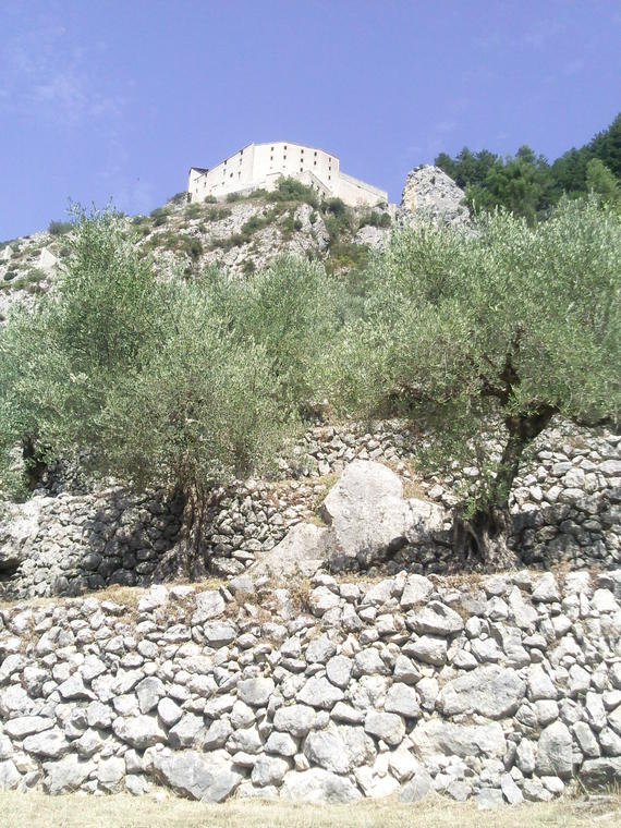 Citadelle et oliviers