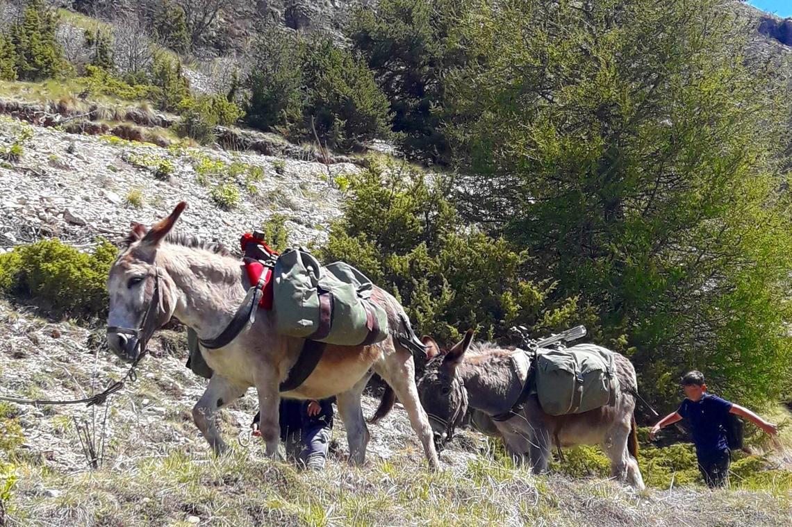 Randonnée accompagnée avec les ânes