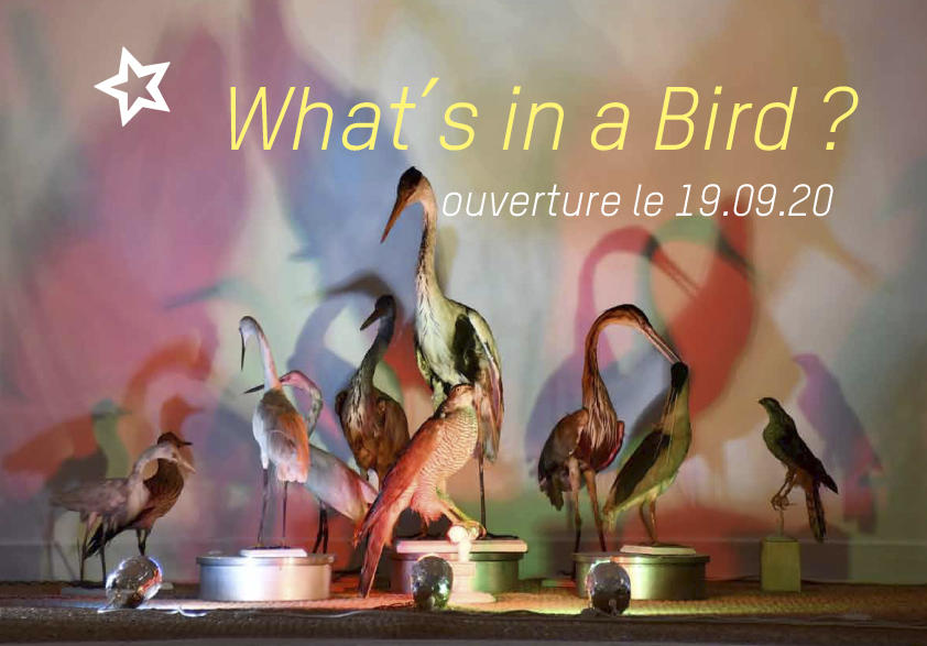 Affiche What's in a Bird