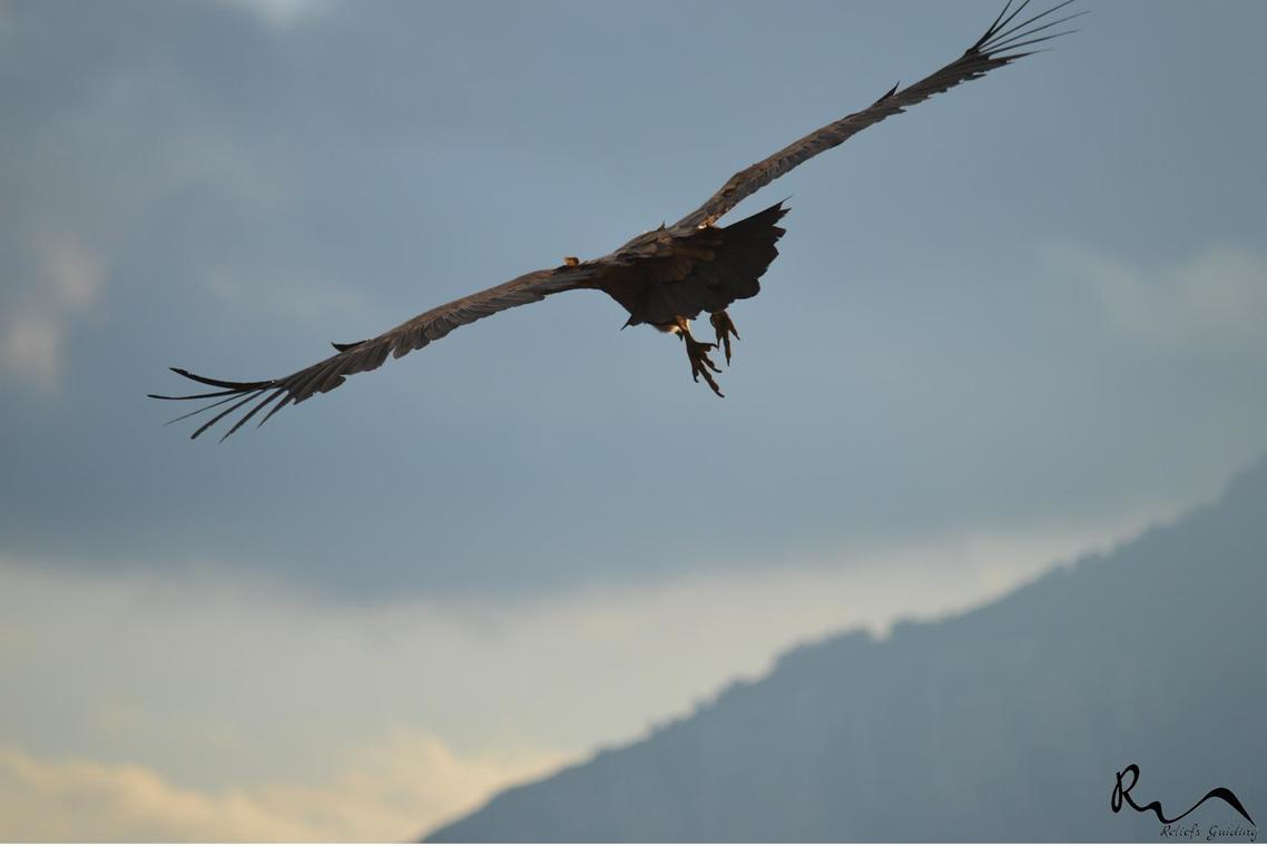 Les vautours de la rive gauche