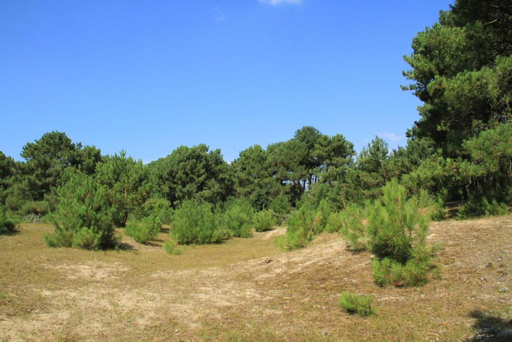 196.dunes-mont-saint-frieux-24.102021 (1)_1