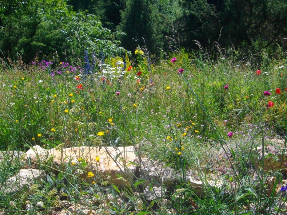 Le jardin du naturaliste