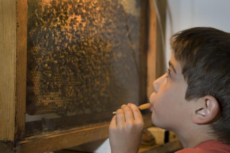 Ateliers de l'abeille visite audioguide Zaza l'Abeille < Chavignon < Aisne < Picardie