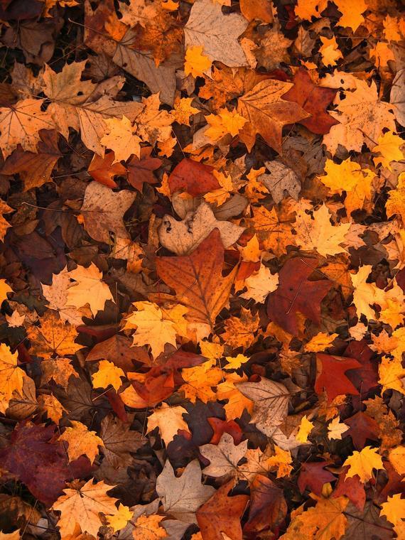 Feuilles automne (2)