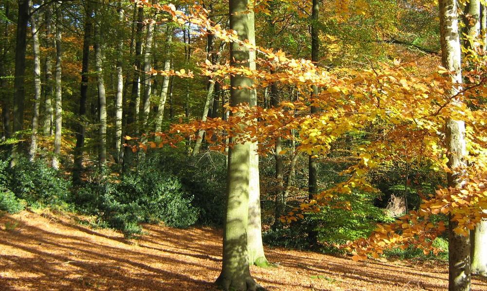 Foret de Retz en automne © ONF  (3)