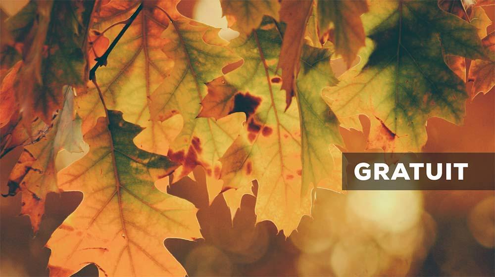 Sortie nature arbres en automne < Laon < Aisne < Picardie